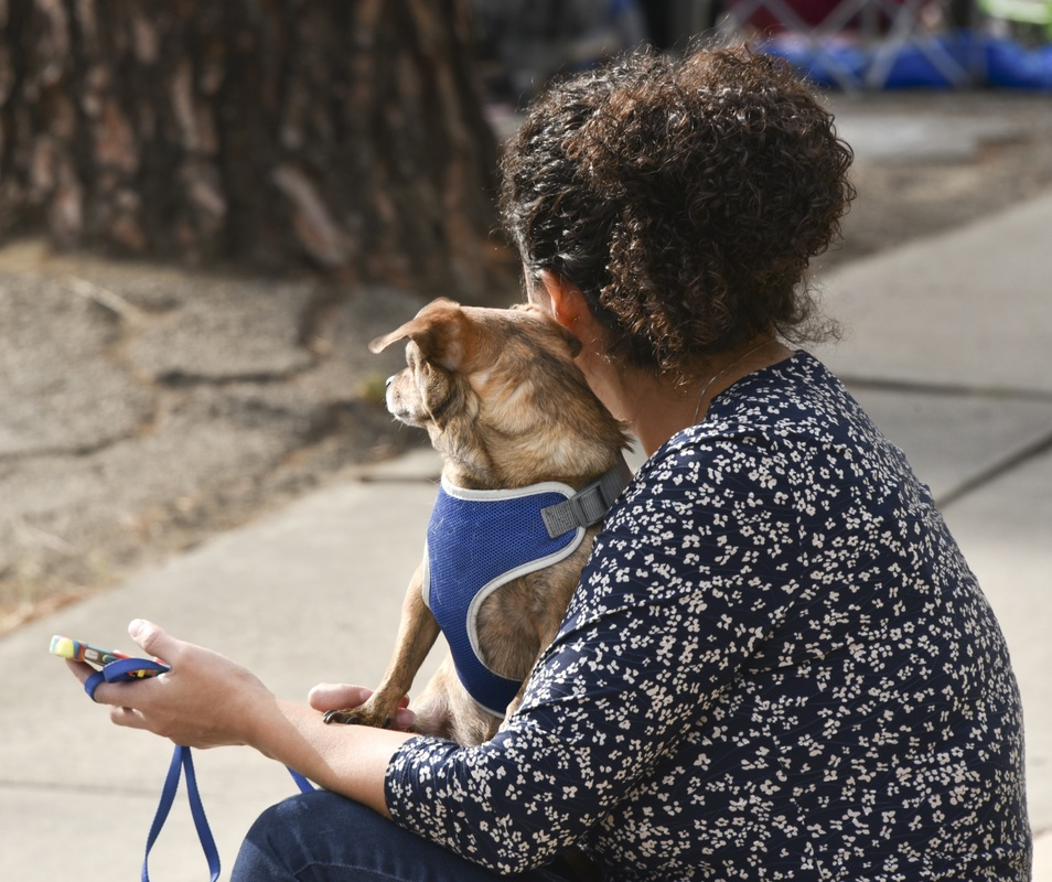 Picture from behind of woman sitting with a dog on her lap that's wearing a blue vest